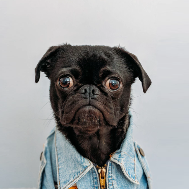 Dogwear-Image
